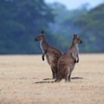Photography Tips | Australian Photography Tours and Workshops