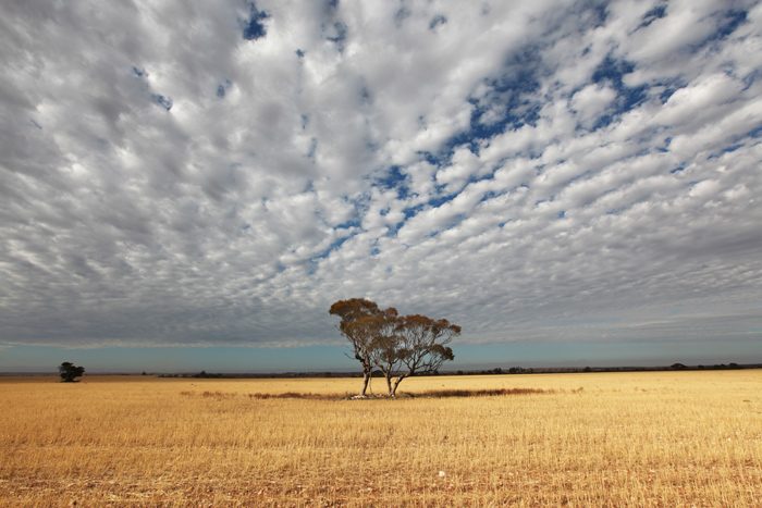 Fields Speak | Shot by Pete Dobres Australian Photography Tours and Workshops
