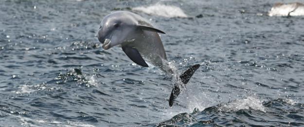 Photograph Dolphins on This Kangaroo Island Tour