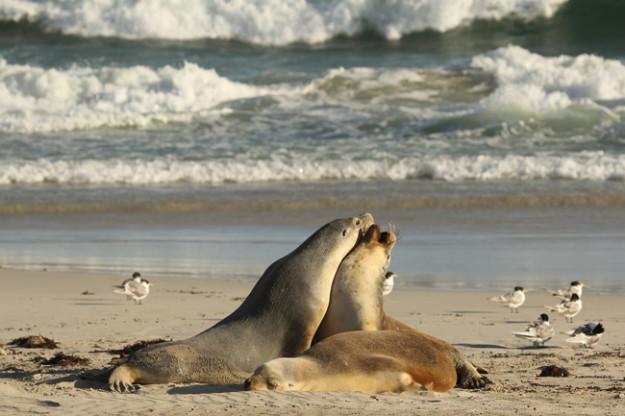 Seal Bay Kangaroo Island Photography Tours