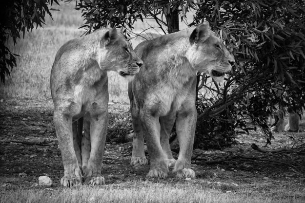Monarto Zoo Day Photographic Workshop | By Pete Dobre Australian Photography Tours and Workshops