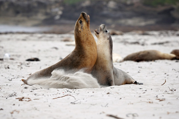 Seal Bay Kangaroo Island Photography Tours