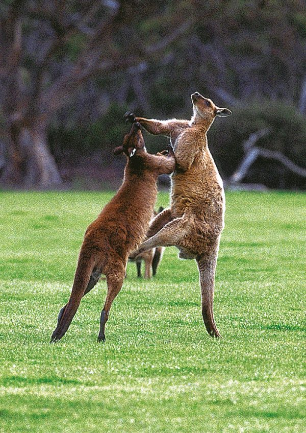 Kangaroo Island South Australia Book by famous Australian photographer Pete Dobre