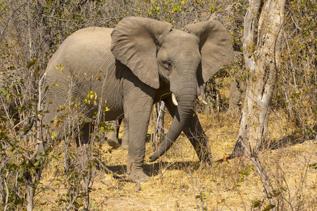 South African Photography Tour - Elephants