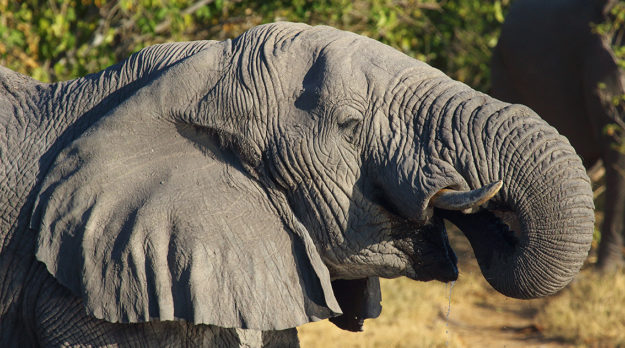 South African Photography Tour
